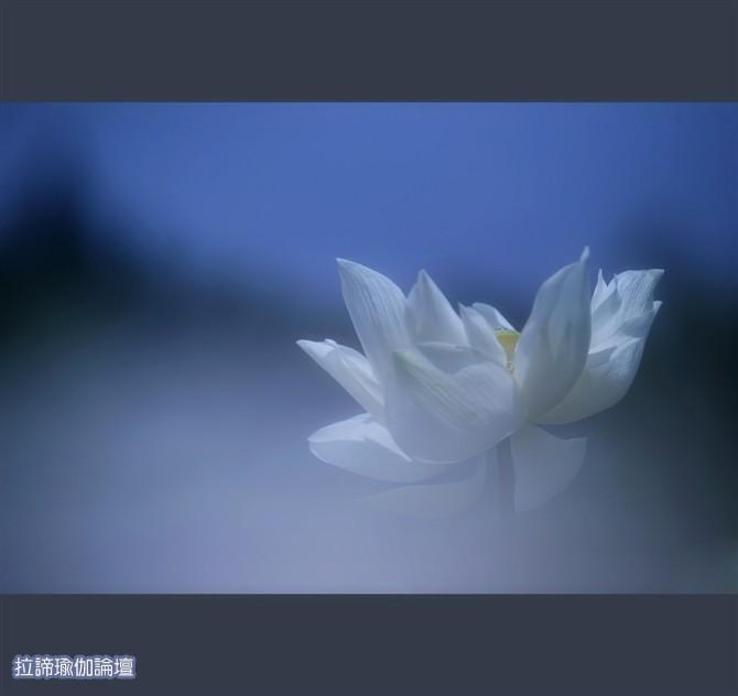 作者:张雯 朗诵:胡真辉 空气,托起了一片蓝天;空气,传递着神的灵气;空气,供养着我们的生命。阳光在空气里传播;雨露是空气的凝结;生命在空气间循环。空气里饱含着上天的爱意;空气里蕴藏着人生的真谛。生命一时一刻也离不开空气。 空气对我们是如此的重要,那么,如何通过体式, 练习呼吸呢?